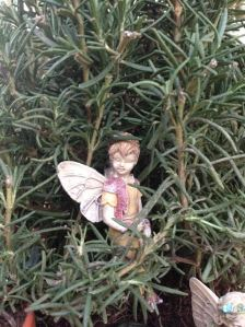 Fairies of The Rosemary Garden - Boy Fairy