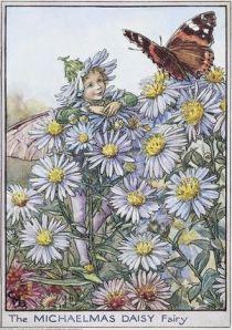 The Michaelmas Daisy Fairy