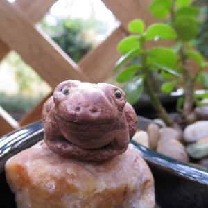 Timothy the Toad